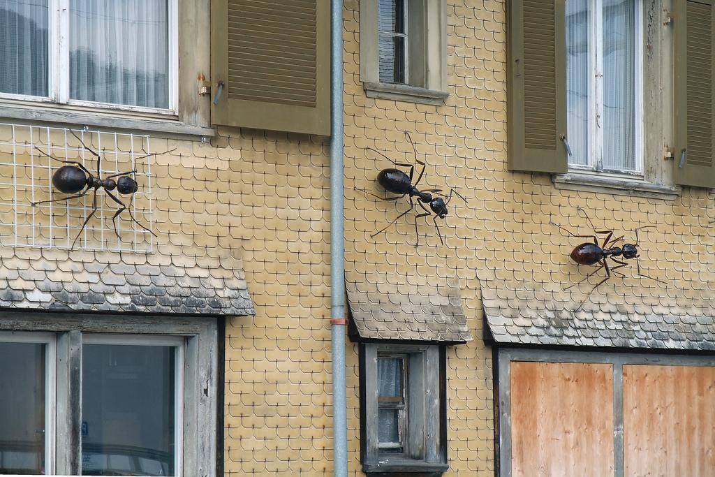 Home-Pest-Infestation