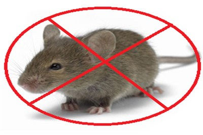 Signs Of Rodent Infestations Rodent Control Los Angeles