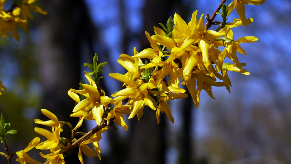 spring-105633_960_720