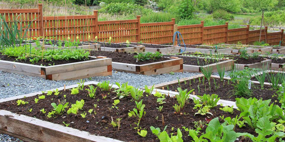 Tips to Prepare a Garden Bed for Planting Vegetables