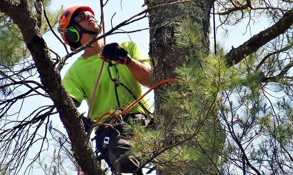 Importance of Tree Pruning Process