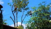 Tree Removal Mississauga
