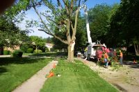 What to Consider When Opting for a Tree Removal Service in Atlanta