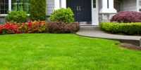 beginners-guide-to-lawn-care
