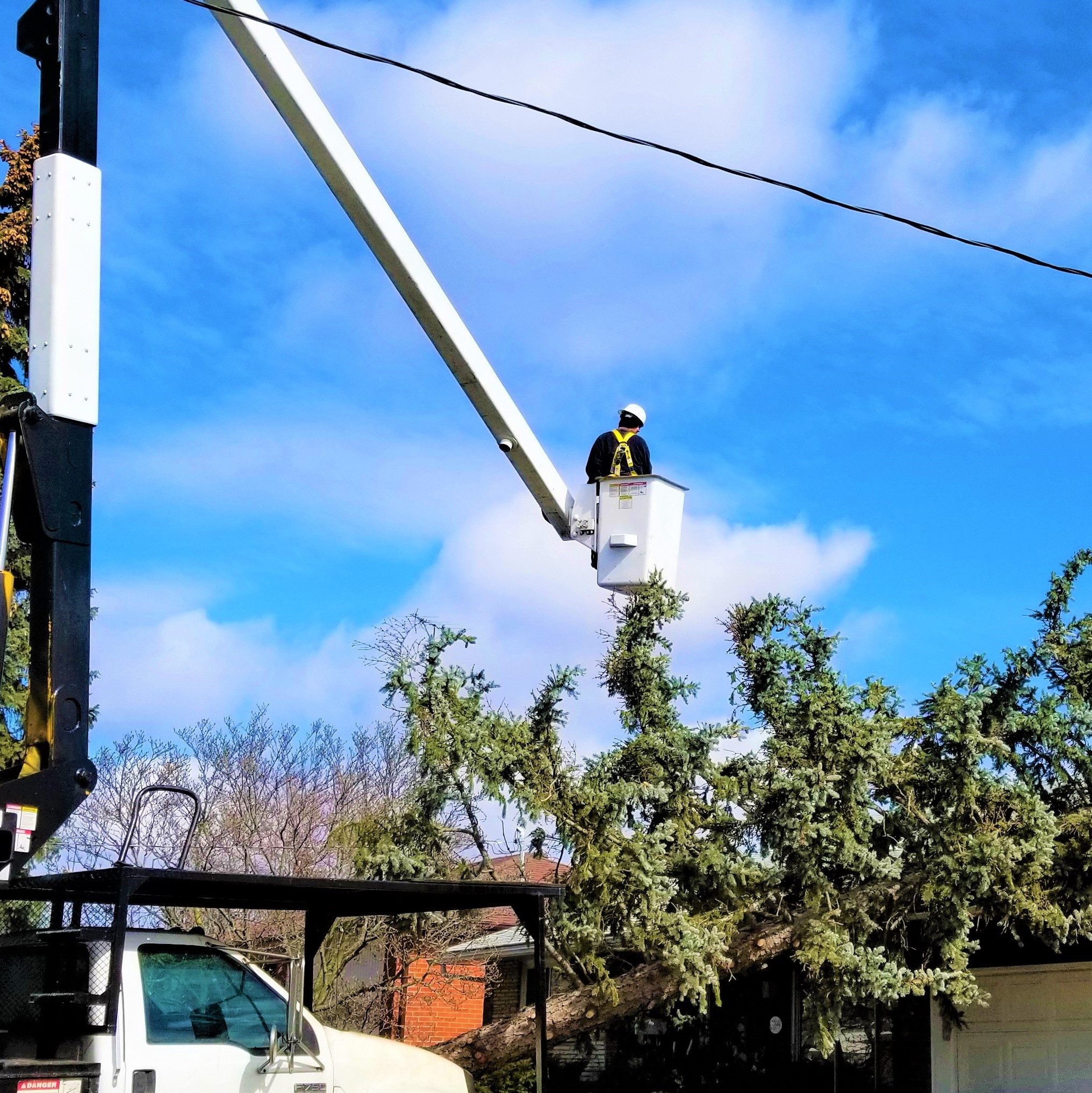The-real-tree-masters-tree-removal