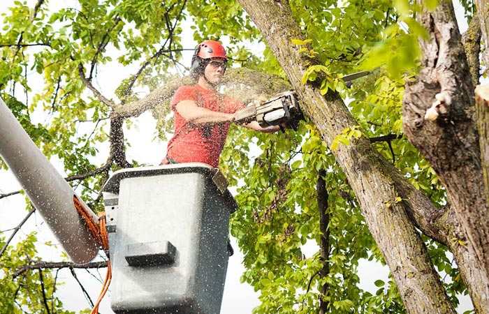 What Do I Need To Know Before Hiring A Tree Service