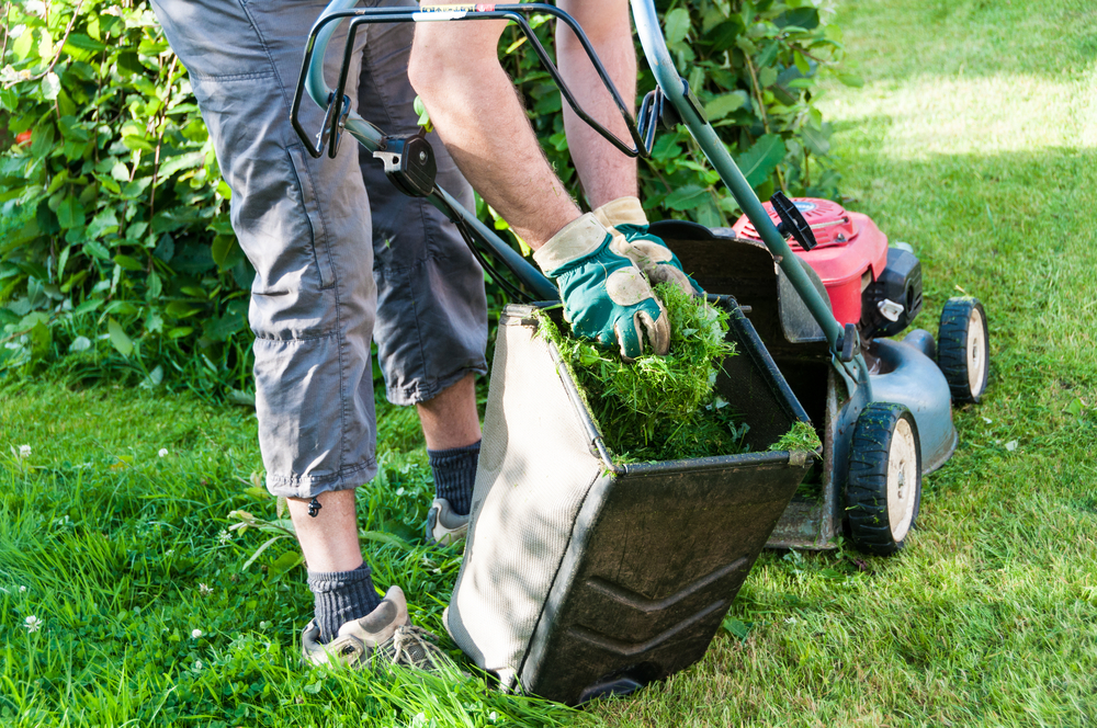 What Does A Lawn Care Service Do