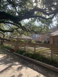 Tree_Service_of_Houston_Nottingham_Country_tree_pruning_Katy__TX_77450