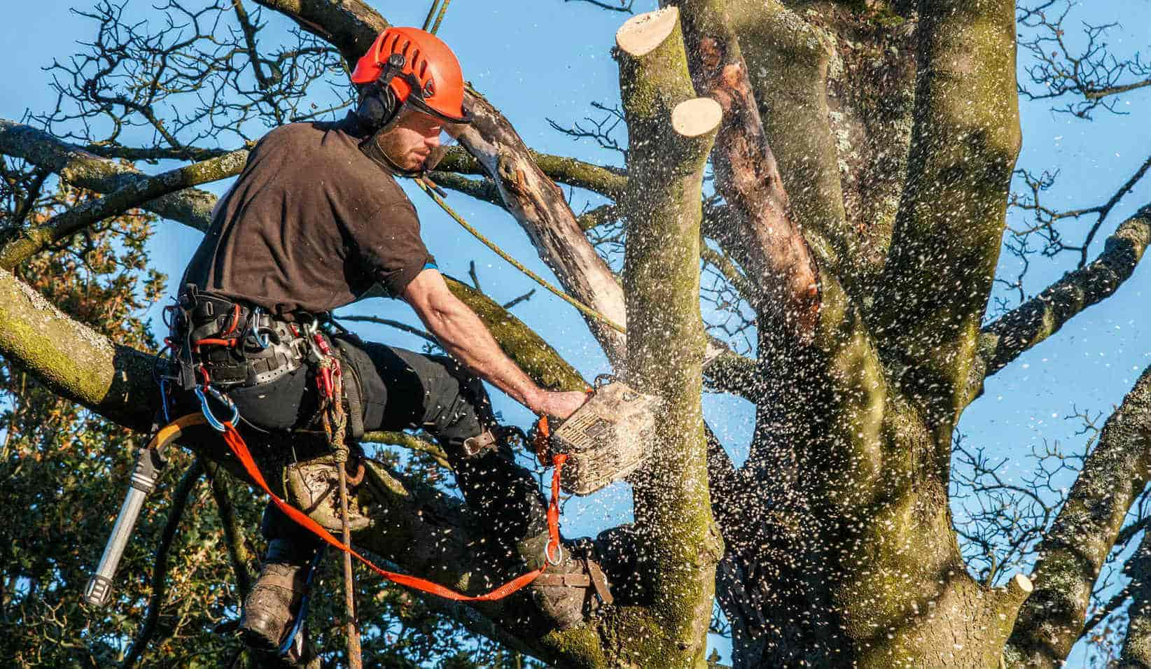 What Do I Need To Know Before Hiring A Tree Trimmer