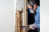What Can I Expect After Termite Treatment