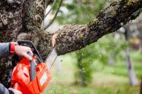3 Precautions before Cutting Trees