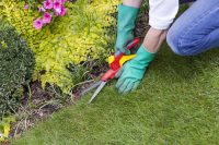 Unique Landscaping Ideas Worth Trying - Landscaping Services Long Island